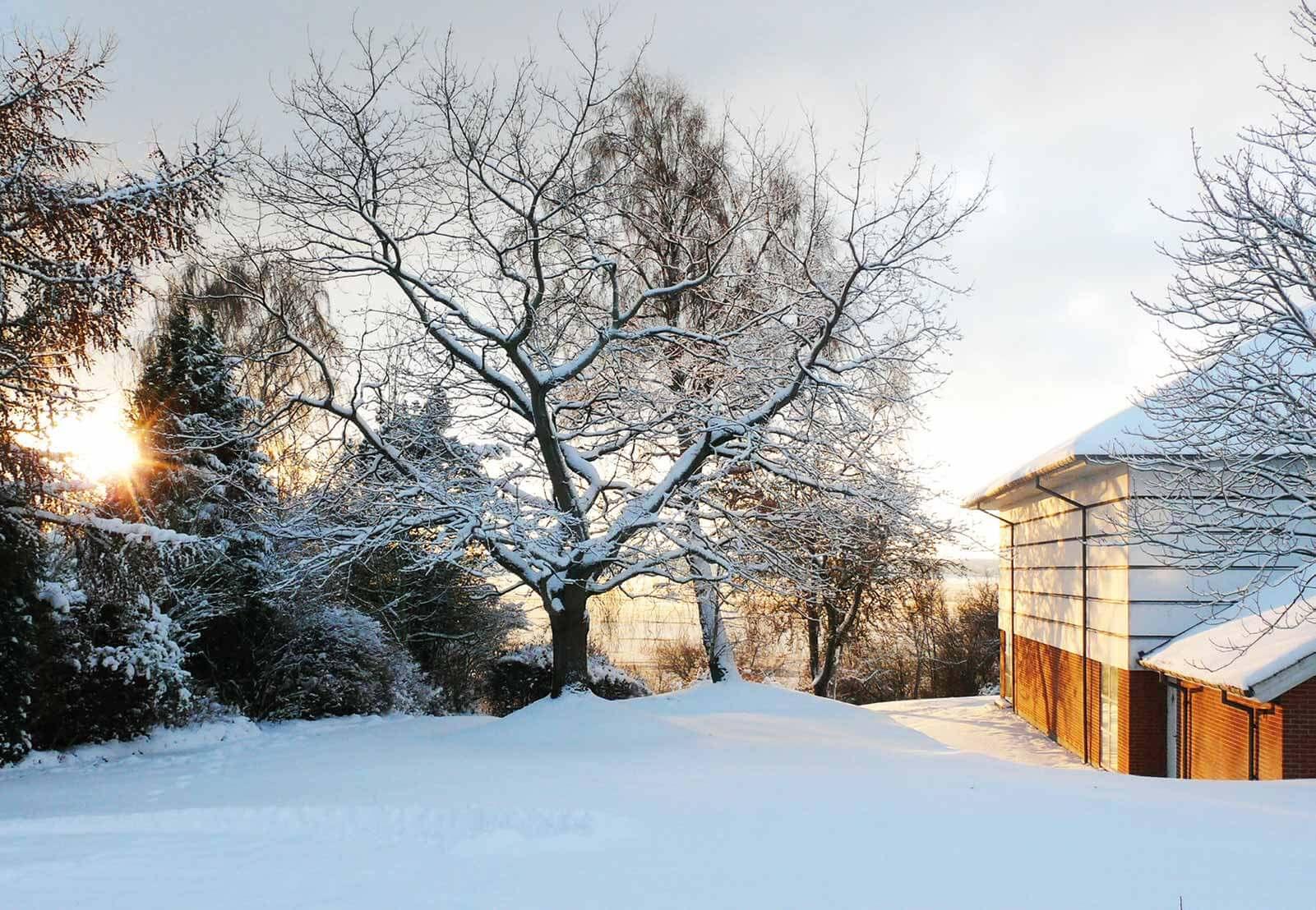 Jul og nytår i Sønderjylland
